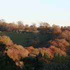 Our Woodland Walk